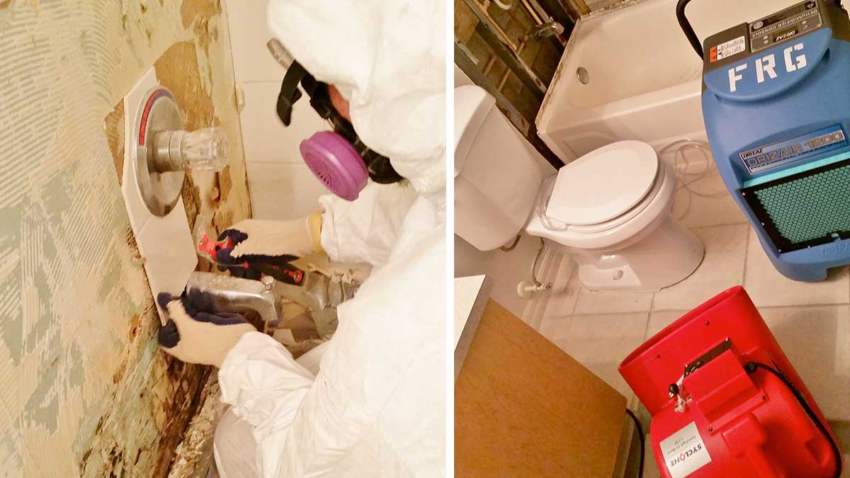 Black Mold Removal. Mold Removal   Remediation by Fundisa Restoration in Palm Beach