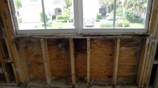 Mold Damaged Plywood